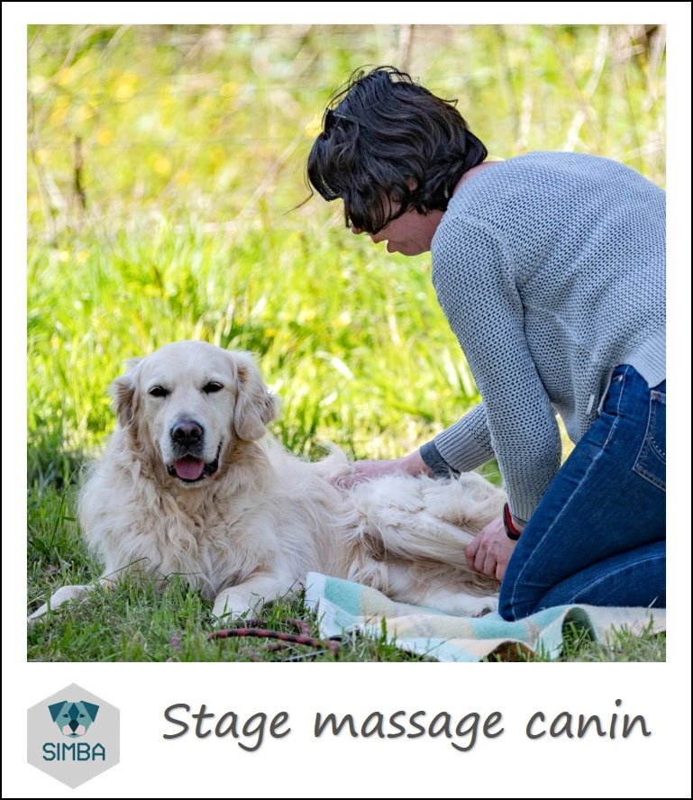 massage canin par si