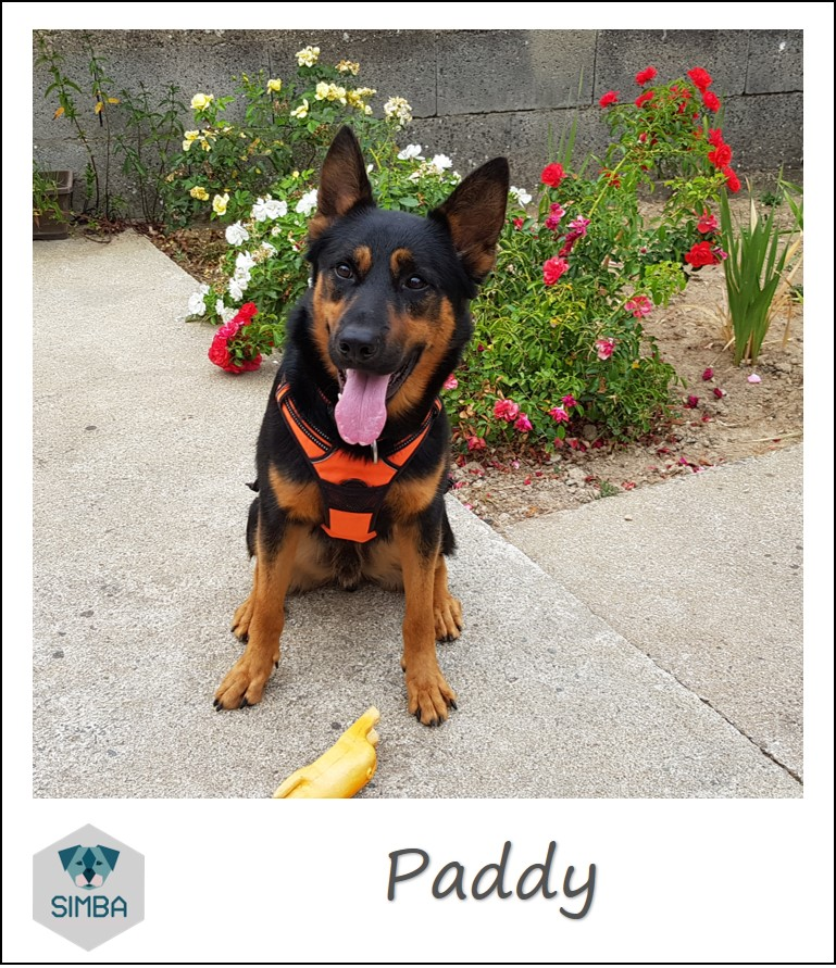 Paddy Beauceron