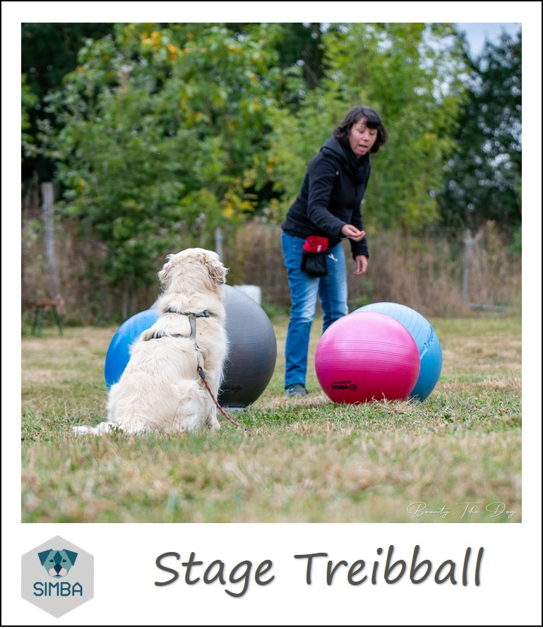 stage Treibball